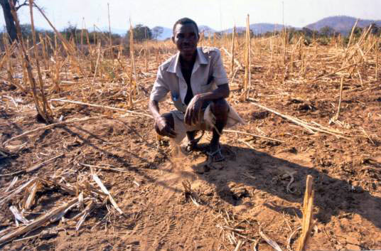 Drought affects 1.4 million in Angola: Unicef